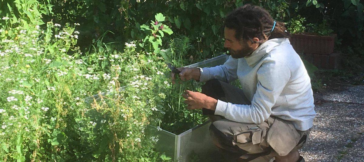 Groentepakket-biologisch-Vegaboerderij